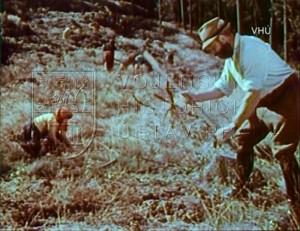 """Film """"Lesy našich výcvikových prostorů"""""""