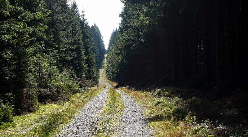 I tudy jezdili před rokem 1989 tzv. strážci hranic. Český les. Foto A. Halada