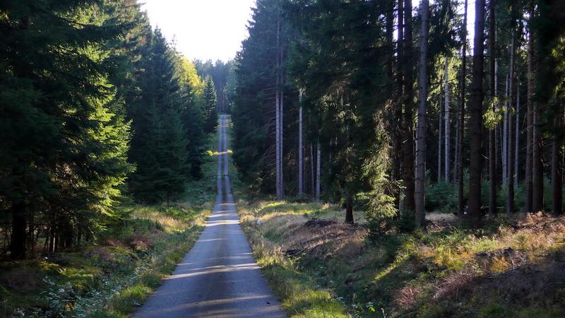 Tzv. signálka, pohraničnická cesta. Český les. Foto A. Halada