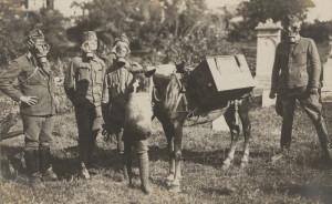 Ukázka německých ochranných masek – Rahmenmaske a tzv. Bauerova maska pro koně. Foto sbírka VHÚ.