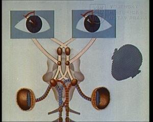 Film Činnost vestibulárního ústrojí