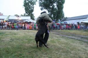 Ukázka výcviku služebních psů