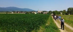 Účastníci vzpomínkové pouti směřují 1. července 2018 z vesnice Aspach-le-Bas na jihozápad. V těchto místech, kolmo na nynější cestu, vedlo za první světové války území nikoho mezi německými a francouzskými frontovými liniemi. Levá část snímku zachycuje prostor, kudy vedl 19. srpna 1918 úspěšný výpad 21. čs. střeleckého pluku.