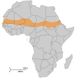Státy Sahelu