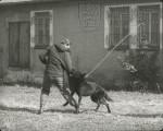 """Film """"Využití služebního psa ve strážní službě"""""""